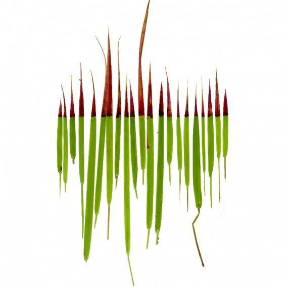 gras-rood-klein